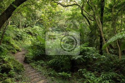 Bild Pfad in einem üppigen, grünen Wald voller Bäume und Pflanzen