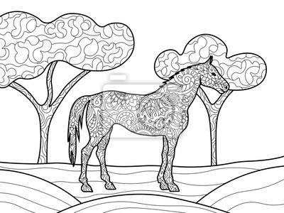 Pferd Ausmalbilder Für Erwachsene Vektor Leinwandbilder Bilder