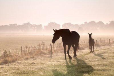 Bild Pferd und Fohlen Silhouetten im Nebel