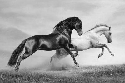 Bild Pferde laufen