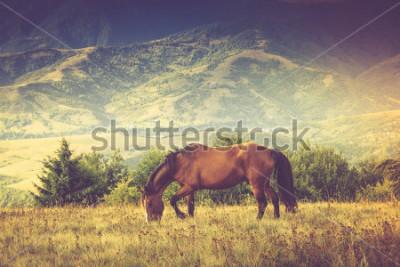 Bild Pferde weiden gegen Berge. Herbstlandschaft Gefiltertes Bild: Kreuz verarbeiteter Weinleseeffekt.