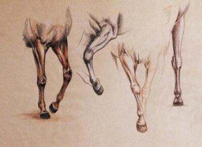 Bild Pferdebeine studieren