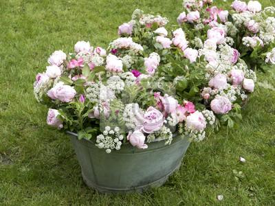 Pfingstrosen Bouquet In Einem Vintage Zinn Bin Im Garten