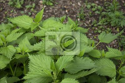 Bild Pflanze