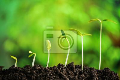 Pflanze-neues Leben
