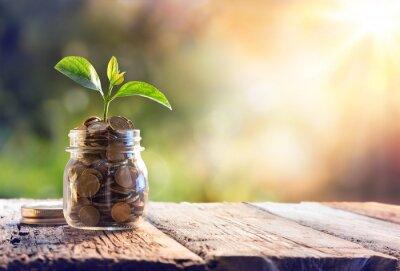 Bild Pflanze wächst in Sparbrücken - Anlage und Interesse Konzept