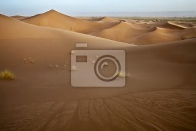 Pflanzen in den Sanddünen in der Sahara.