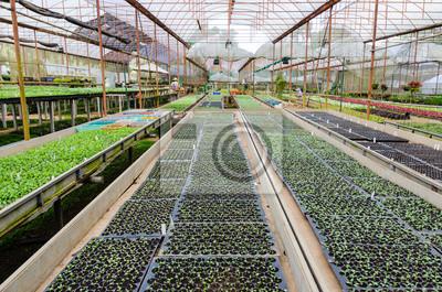 Bild PLANT Gärtnerei Blumen und Zierpflanzen