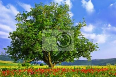 Poppy Feld, blauer Himmel und großen grünen Baum 2
