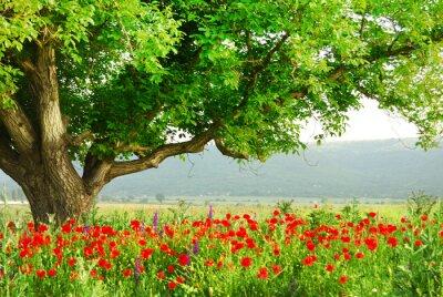 Poppy Feld und großen grünen Baum
