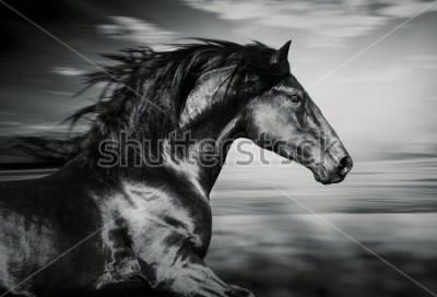 Bild Porträt des spanischen laufenden Pferdes, Schwarzweiss-Foto