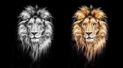 Bild Porträt eines schönen Löwen, Löwen in der Dunkelheit, Ölfarben