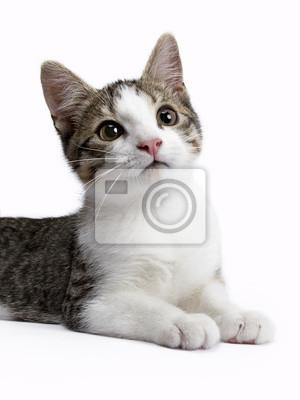Porträt Kätzchen auf weißem Hintergrund