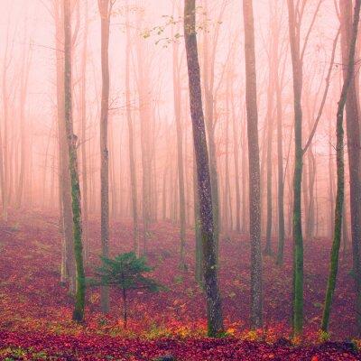 Bild Purple color season forest