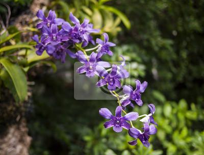 Bild Purple orchid