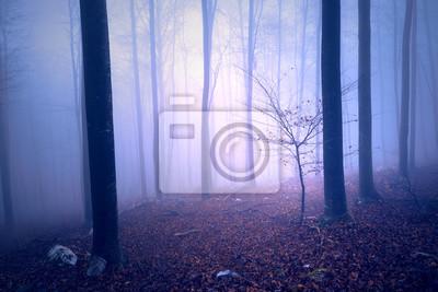 Purpurrote blaue farbige nebelige Waldbaumlandschaft der Fantasie. Farbfilter-Effekt verwendet.