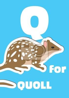 Q für das Quoll, ein Tier-Alphabet für Kinder