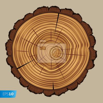 Querschnitt Baumstumpf, Vektor-Illustration Eps 10