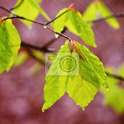 Rainy Frühjahr Blätter