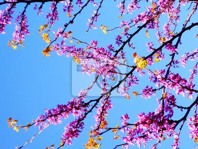 Ramas de árbol con flores rosas en primavera en el jardín ...
