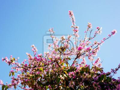 Bild: Ramas de los árboles con flores rosas und primavera en el jardín