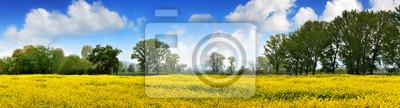 Rapen gelben Feld und blauen Himmel