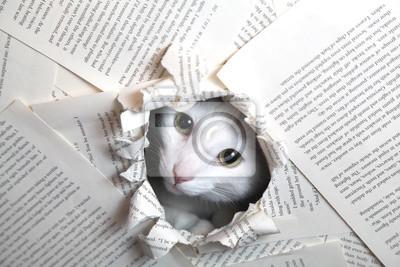 Bild Ratte cat katze