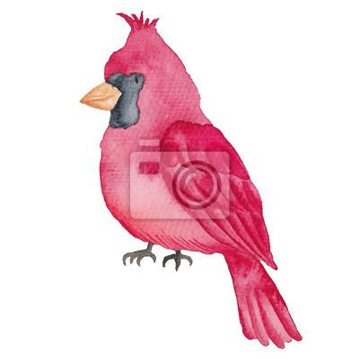 Bild: Red cardinal vögel aquarell hand-gemalt illustration isoliert