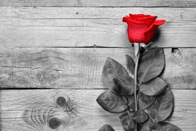 Bild Red Rose auf schwarzem und weißem hölzernem Hintergrund