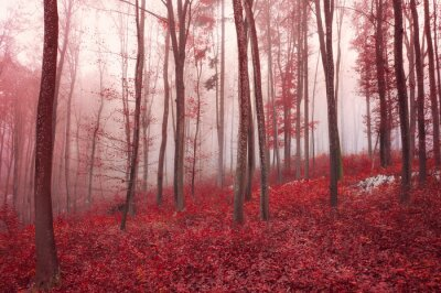 Red saturated artistic foggy beech trees