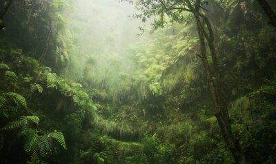 Bild Regenwald tropisch nass abenteuer