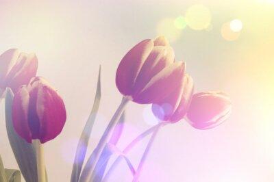 Bild Retro- Tulpen