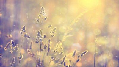 Retro verwischt Rasen am Sonnenuntergang mit Akzent. Weinlese-lila rot-gelb-orange Farbfiltereffekt eingesetzt. Selektiven Fokus verwendet.