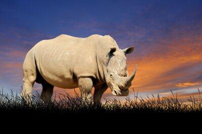 Bild Rhino auf dem Hintergrund der Sonnenuntergang Himmel