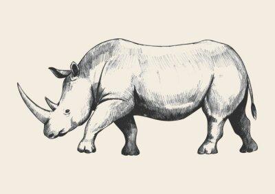 Bild Rhino Sketch