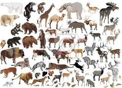 Bild riesige Sammlung von Farbe Tieren