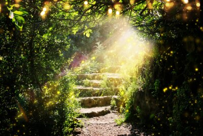 Bild Road and stone stairs in magical and mysterious dark forest with mystical sun light and firefly. Fairy tale concept