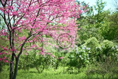 Bild: Rosa blume auf baum zweige blüht in einem garten, schöne  frühlingslandschaft