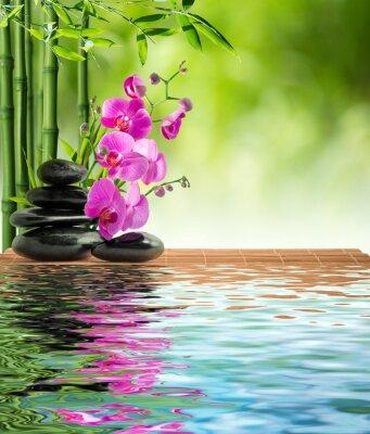 rosa Orchidee schwarzem Stein und Bambus auf dem Wasser