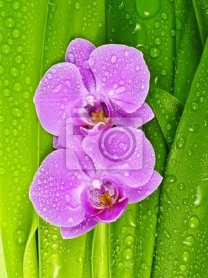 Bild rosa Orchideen