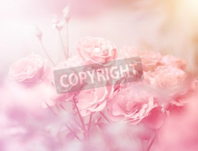 Bild Rosa Rosen in der weichen Farbe, Gemacht mit Unschärfenart für Hintergrund