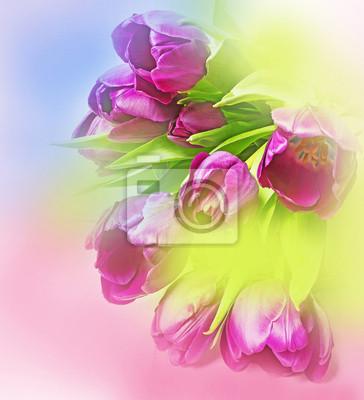 Bild rosa Tulpen