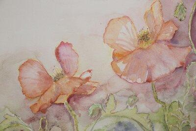 Bild Rosa und orange Mohnblumen.