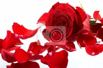 Bild rosé