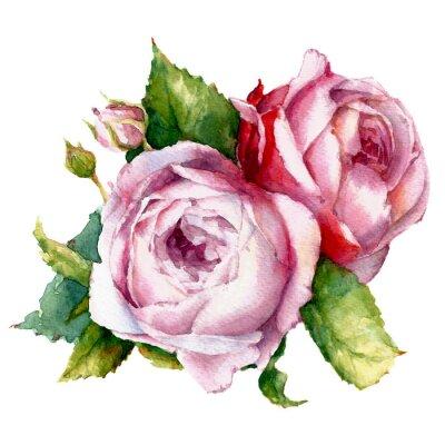 Bild Rosen