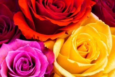 Bild Rosen Hintergrund