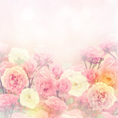 Bild Roses Background