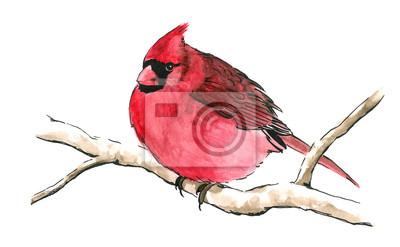 Bild rote Kardinal Vogel auf Zweig isoliert auf weißem Hintergrund für Clip-Art, netter roter Singvogel mit schwarzer Maske Augen und aufgeplustert aus Federn ist handgezeichneten Aquarell Naturmalerei Ill