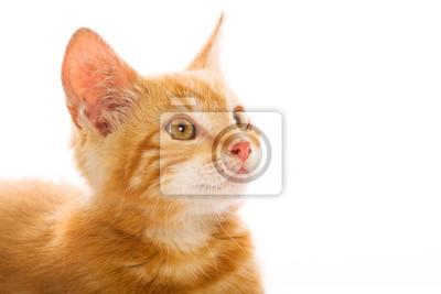 Rote kleine Katze