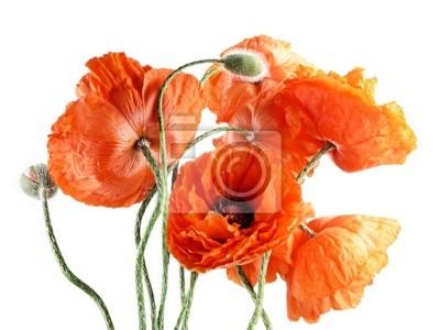 Bild Rote Mohnblumen